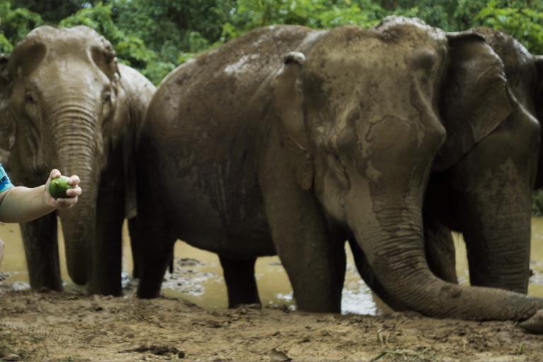 A group of elephants in a mud pool