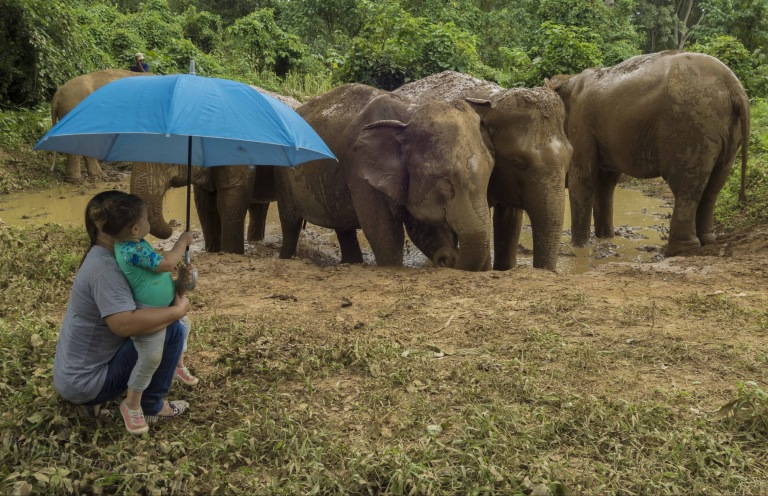 A group of elephants in a mud pool, and a woman and child under an umbrella in the foreground