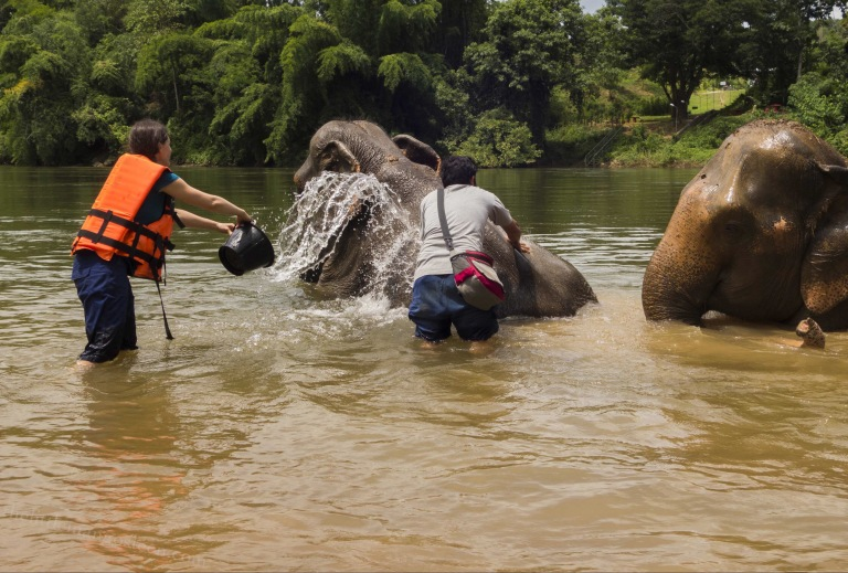 Tourists splash water on elephants bathing in the river