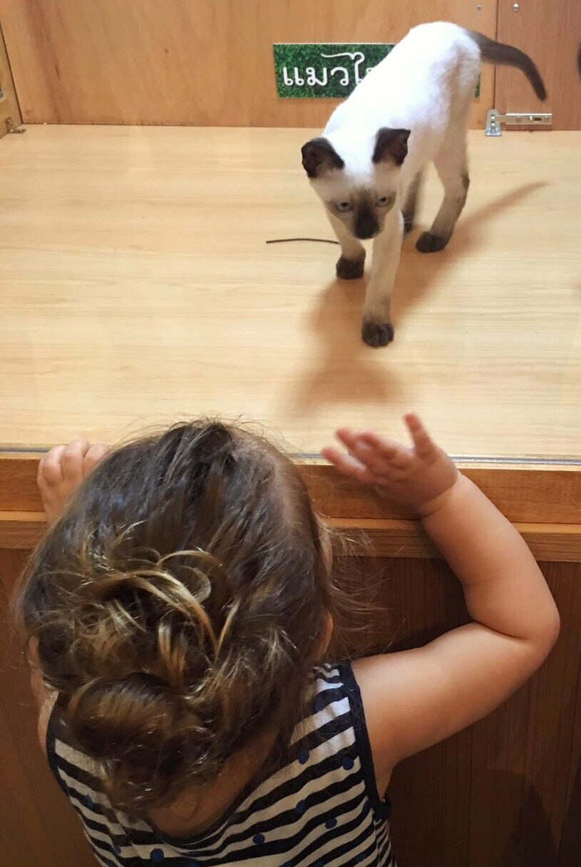 Toddler girl watching a siamese kitten being exhibited behind glass