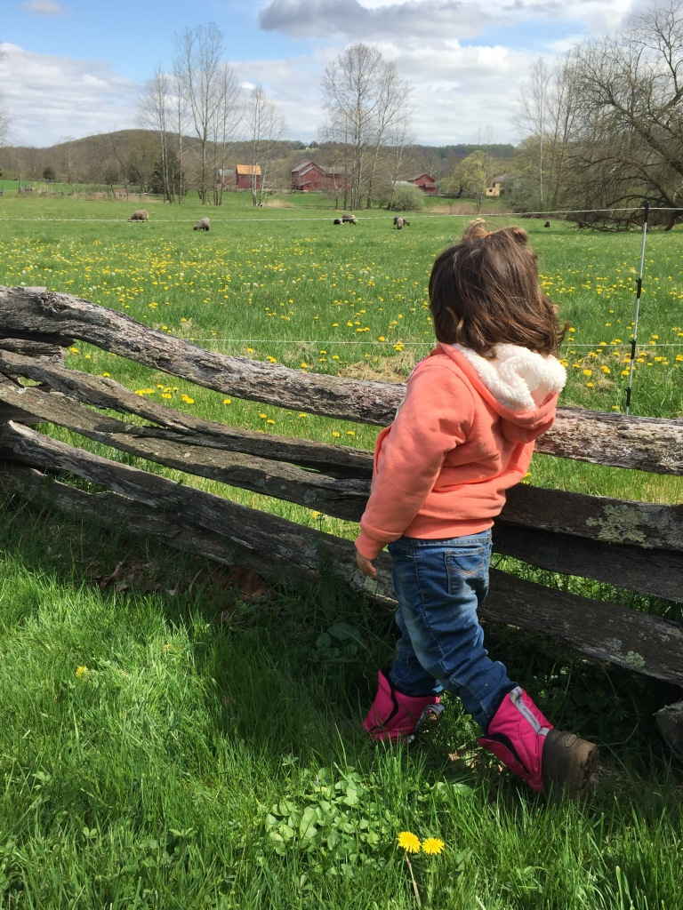 Young child by a wood fence in front of a green meadow full of dandelions
