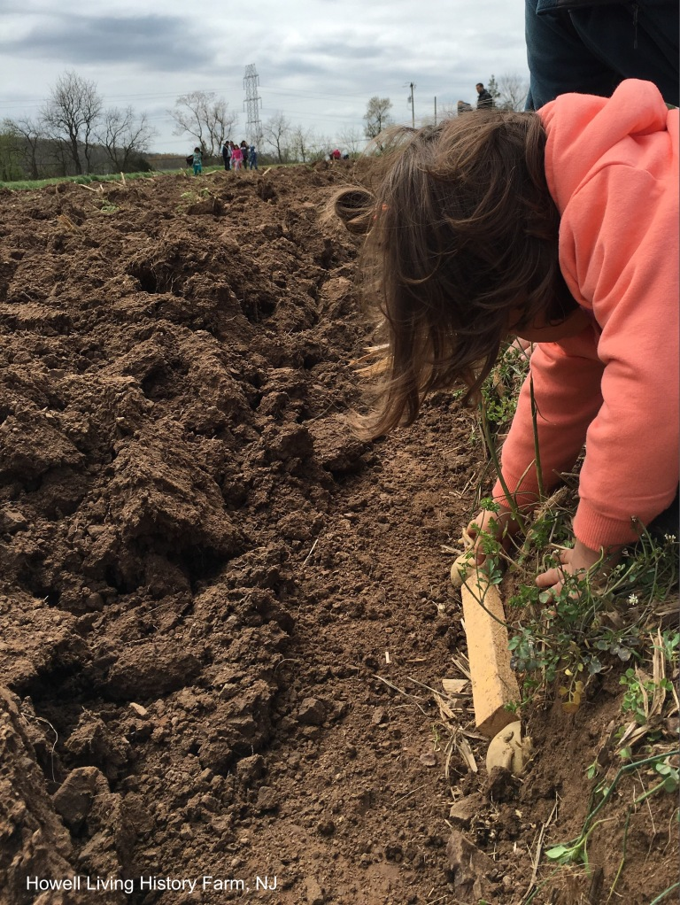 Child planting potato cuttings in a field
