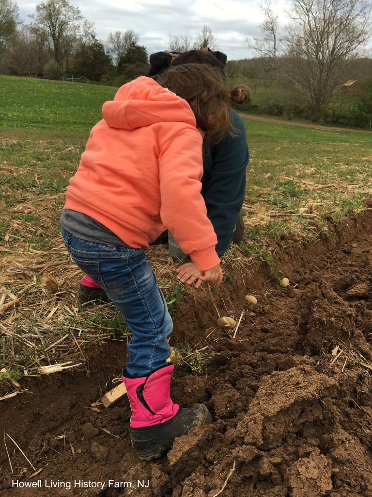 Child and adult in a field planting potato cuttings