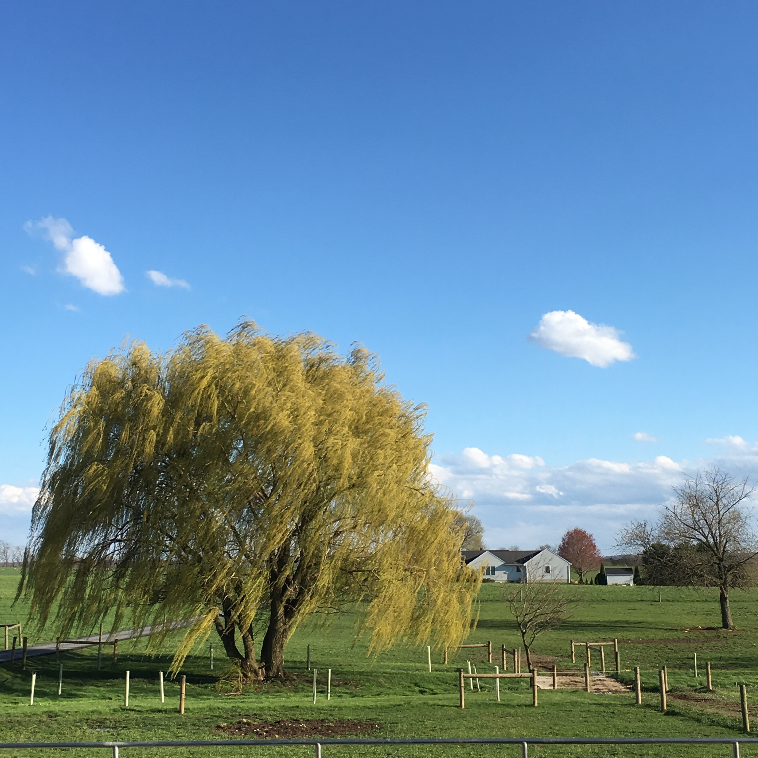 Amish country landscape with magnificent tree in Pennsylvania