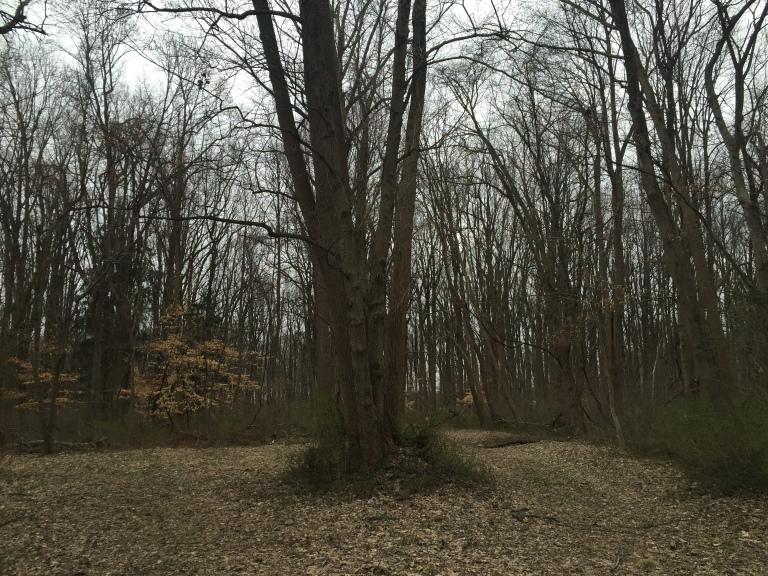 institute woods