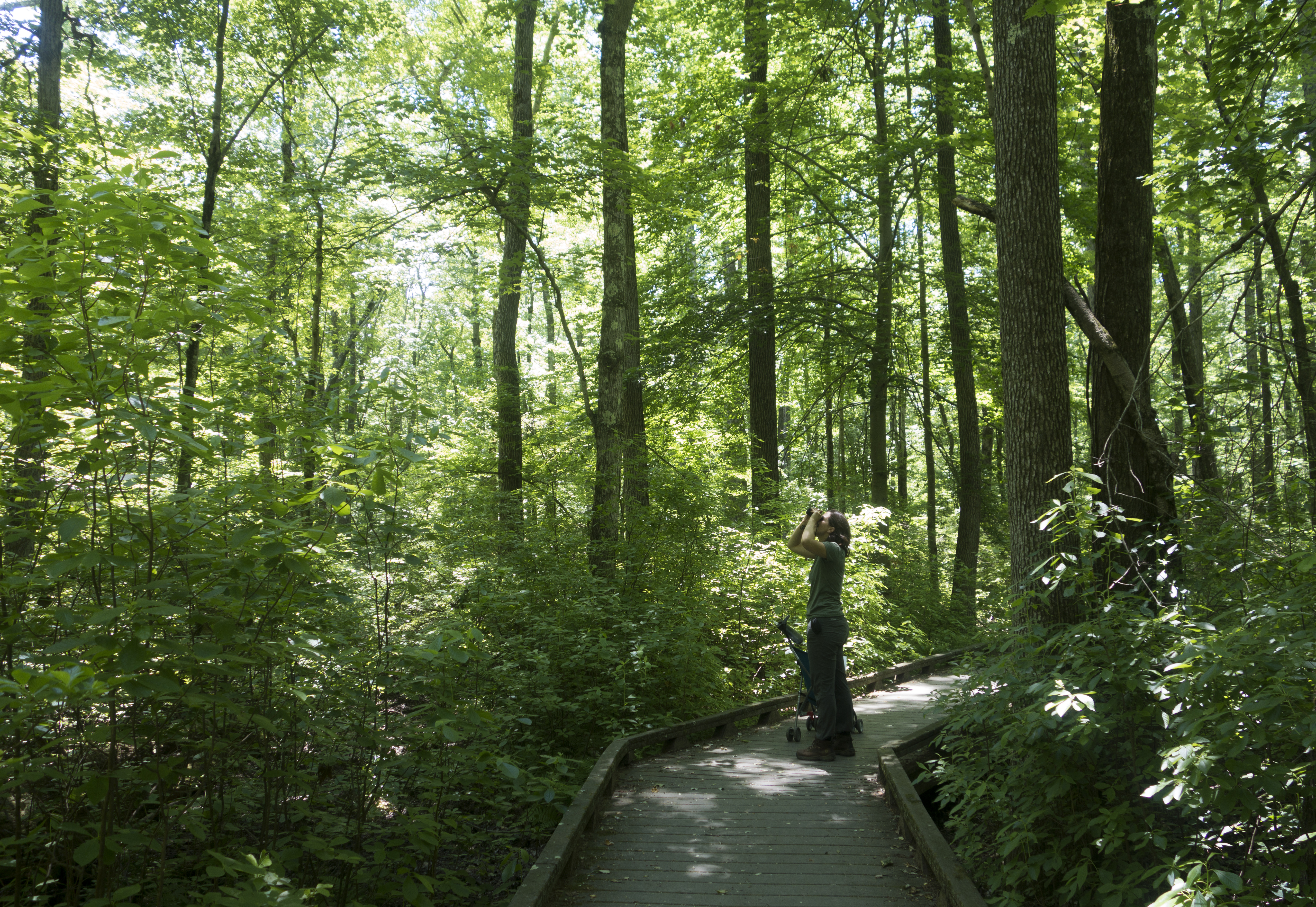 Woods with lush green vegetation and woman walking on wooden path