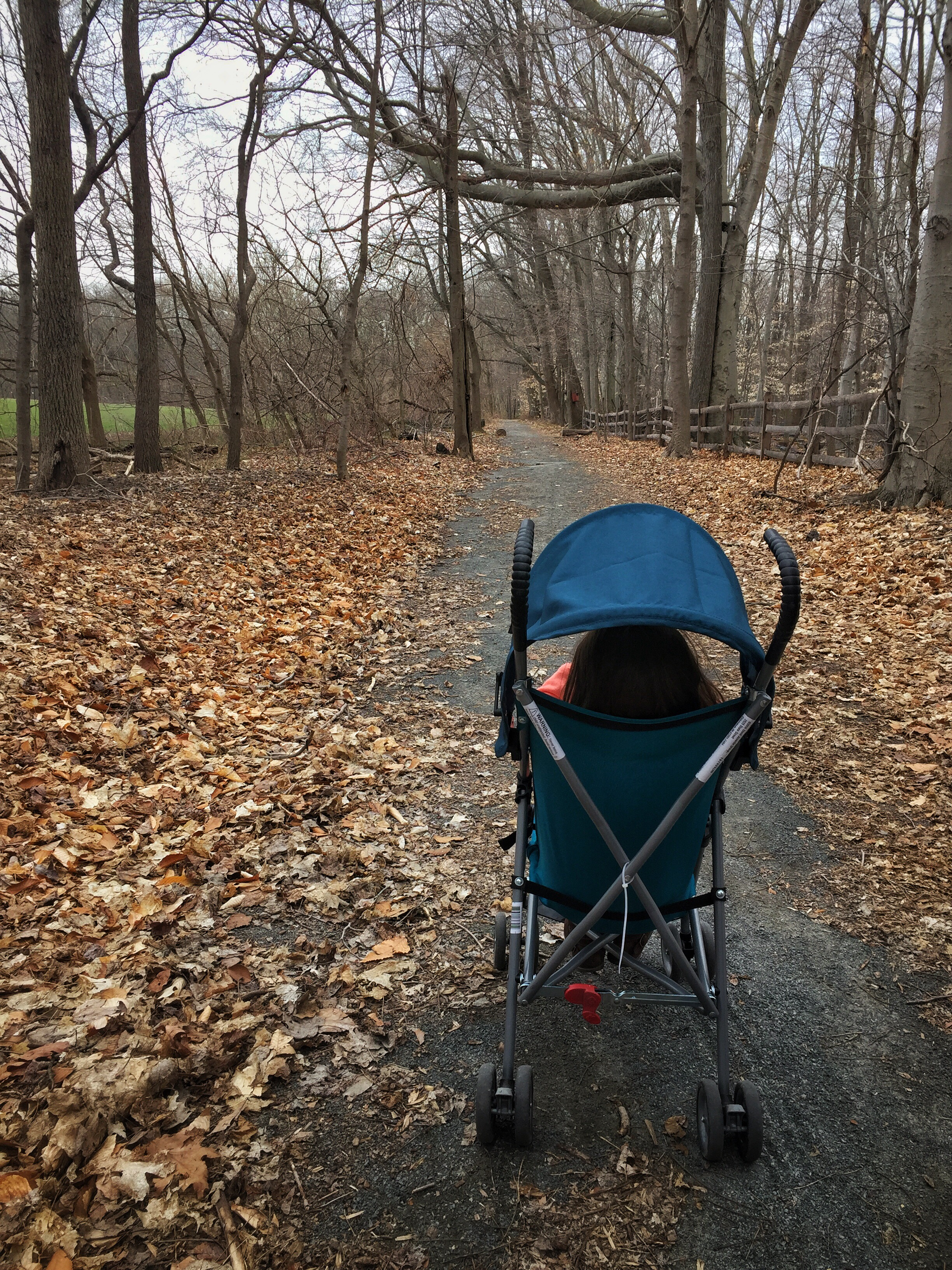 Child on a stroller on a path surrounded by fallen leaves on a grey autumn day